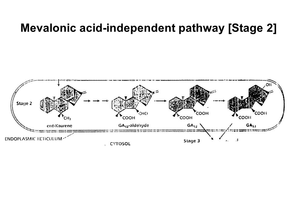 Mevalonic acid-independent pathway [Stage 2]
